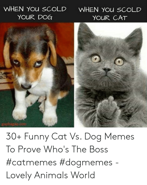 Animals, Funny, and Memes: WHEN You sCoLD  YOUR DOG  WHEN You SCOLD  YOUR CAT  gapbagap.com 30+ Funny Cat Vs. Dog Memes To Prove Who's The Boss #catmemes #dogmemes - Lovely Animals World