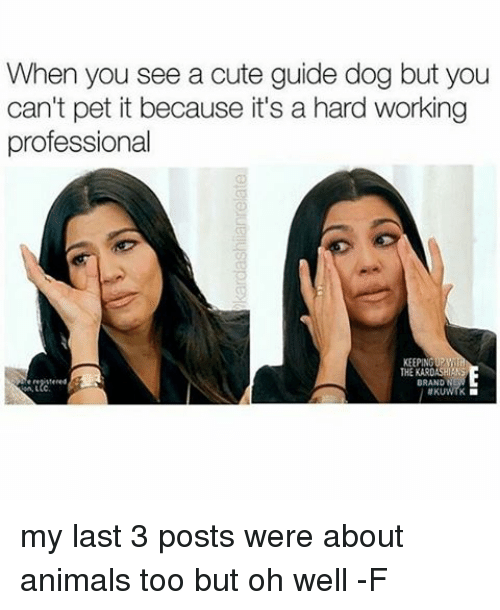 guid: When you see a cute guide dog but you  can't pet it because it's a hard working  professional  KEEPING  THE KARDASHIRM my last 3 posts were about animals too but oh well -F