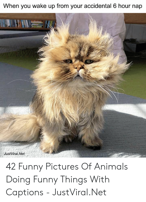 Animals, Funny, and Pictures: When you wake up from your accidental 6 hour nap  JustViral Net 42 Funny Pictures Of Animals Doing Funny Things With Captions - JustViral.Net