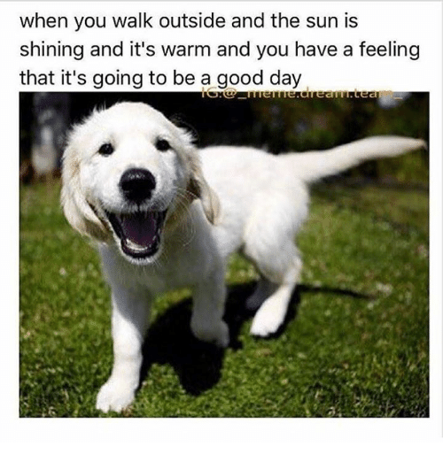 25 Best Memes About Its Going To Be A Good Day Its Going To