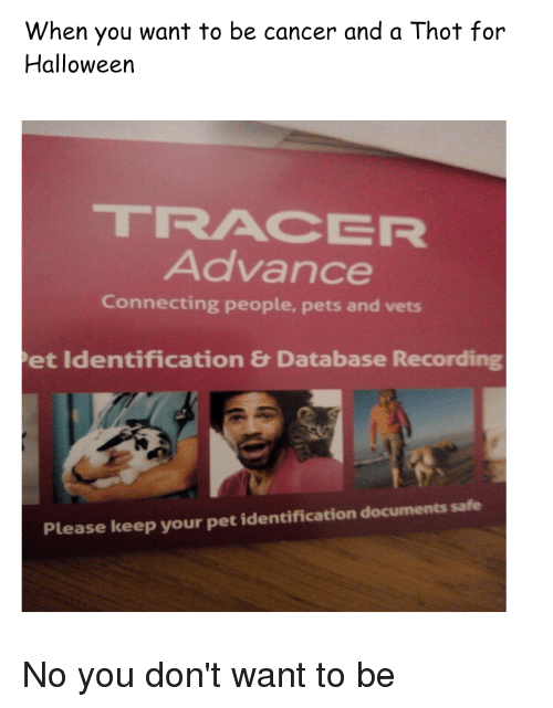 Halloween, Thot, and Cancer: When you want to be cancer and a Thot for  Halloween  TRACER  Advance  Connecting people, pets and vets  et Identification & Database Recording  Please keep your pet identification documents safe