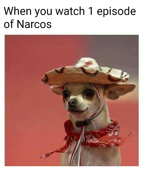 Narcos: When you watch 1 episode  of Narcos