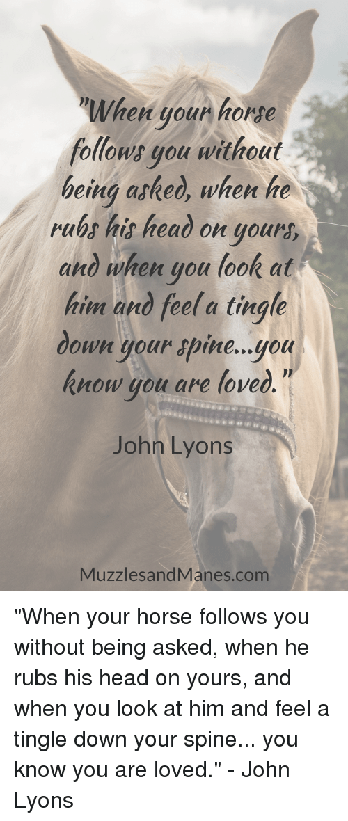 "tingle: When youn horse  follows gou without  being asked, when he  rubs his heao on your  and when you look at  him and feel a tingle  down your apine...you  know you are loved  John Lyons  MuzzlesandManes.com ""When your horse follows you without being asked, when he rubs his head on yours, and when you look at him and feel a tingle down your spine... you know you are loved."" - John Lyons"