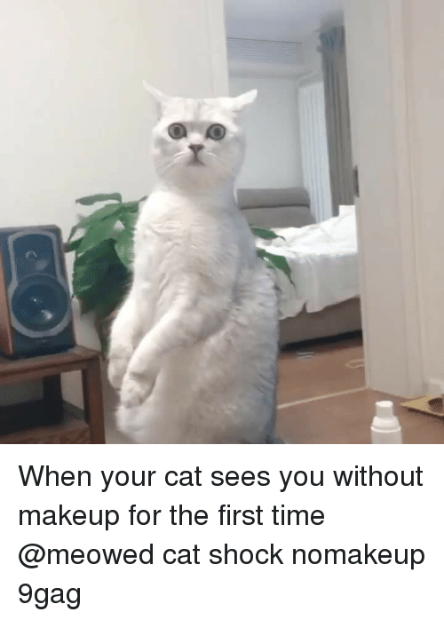 9gag, Makeup, and Memes: When your cat sees you without makeup for the first time⠀ @meowed cat shock nomakeup 9gag