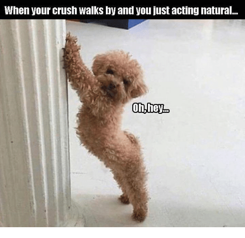 Crush, Memes, and Acting: When your crush walks by and you just acting natural...
