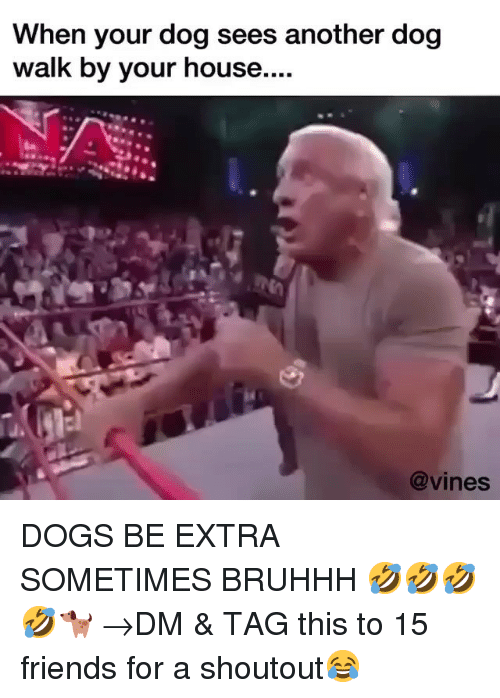 Bruhhh: When your dog sees another dog  walk by your house....  @vines DOGS BE EXTRA SOMETIMES BRUHHH 🤣🤣🤣🤣🐕 →DM & TAG this to 15 friends for a shoutout😂