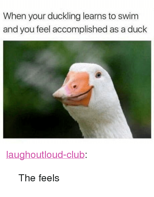 "Club, Tumblr, and Blog: When your duckling learns to swim  and you feel accomplished as a duck <p><a href=""http://laughoutloud-club.tumblr.com/post/172554328545/the-feels"" class=""tumblr_blog"">laughoutloud-club</a>:</p>  <blockquote><p>The feels</p></blockquote>"