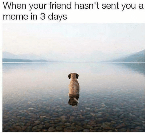 Senting: When your friend hasn't sent you a  meme in 3 days