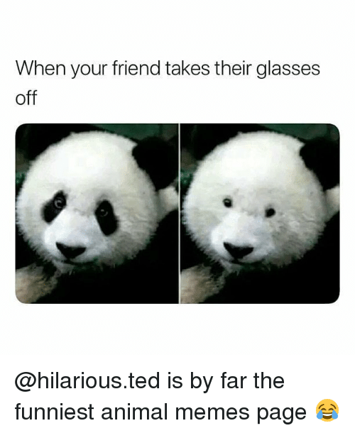 Funniest Animal: When your friend takes their glasses  off @hilarious.ted is by far the funniest animal memes page 😂