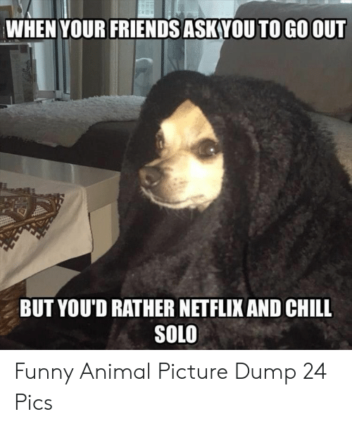 Chill, Friends, and Funny: WHEN YOUR FRIENDS ASK VOU TO GO OUT  BUT YOU'D RATHER NETFLIX AND CHILL  SOLO Funny Animal Picture Dump 24 Pics