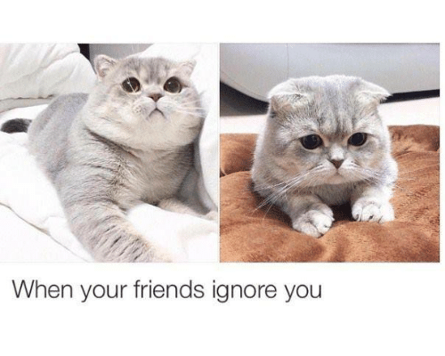 25 Best Memes About When Your Friends Ignore You When Your
