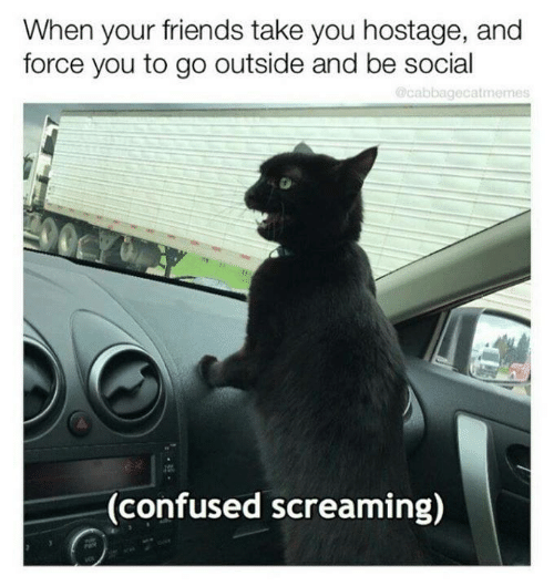 go outside: When your friends take you hostage, and  force you to go outside and be social  Ocabbagecatmemes  CY  00  (confused screaming)