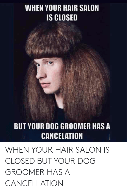 Closed: WHEN YOUR HAIR SALON IS CLOSED BUT YOUR DOG GROOMER HAS A CANCELLATION
