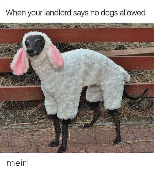 Dogs, MeIRL, and  No: When your landlord says no dogs allowed meirl