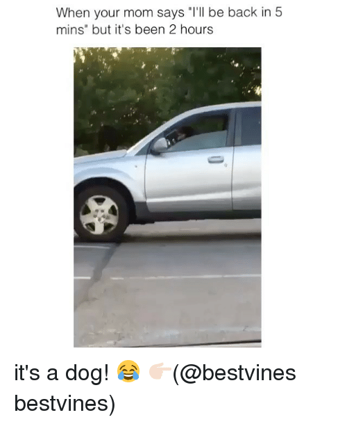 """Backes: When your mom says """"T'll be back in 5  mins"""" but it's been 2 hourss it's a dog! 😂 👉🏻(@bestvines bestvines)"""