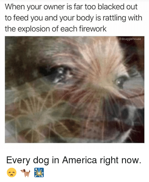 America, Blacked, and Hood: When your owner is far too blacked out  to feed you and your body is rattling with  the explosion of each firework  @douggiehouse Every dog in America right now. 😞 🐕 🎇