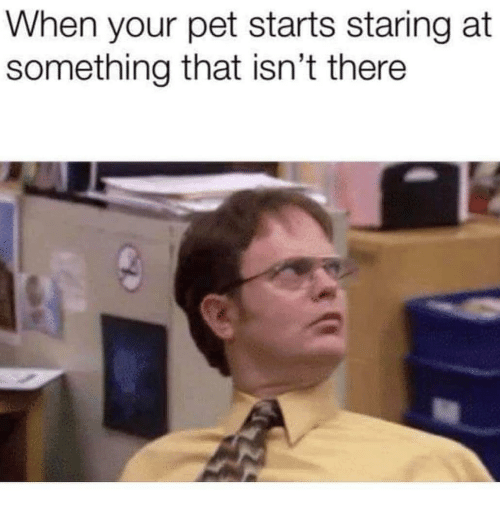 Dank Memes, Pet, and Staring: When your pet starts staring at  something that isn't there