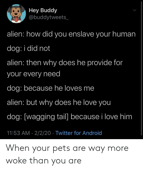 Pets: When your pets are way more woke than you are