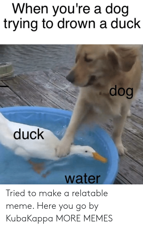 to drown: When you're a doq  trying to drown a duck  dog  duck  water Tried to make a relatable meme. Here you go by KubaKappa MORE MEMES