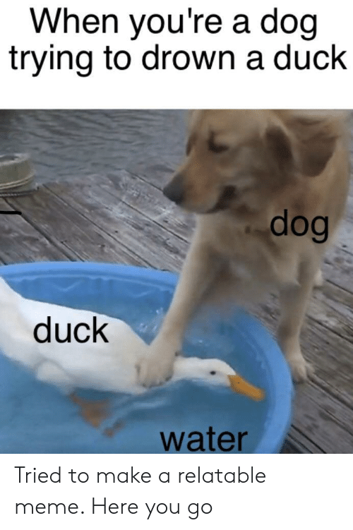 to drown: When you're a doq  trying to drown a duck  dog  duck  water Tried to make a relatable meme. Here you go