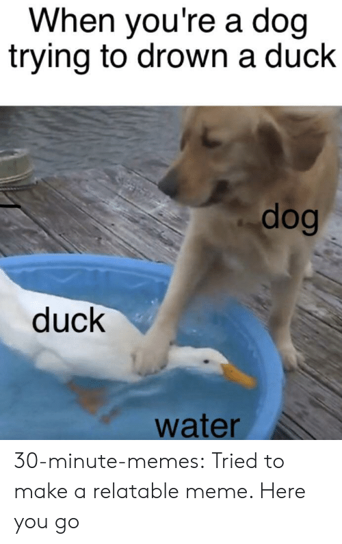 to drown: When you're a doq  trying to drown a duck  dog  duck  water 30-minute-memes:  Tried to make a relatable meme. Here you go