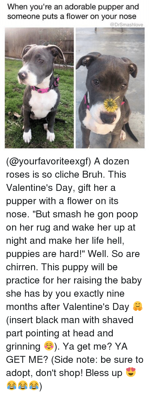 """Rugs: When you're an adorable pupper and  someone puts a flower on your nose  (a DrSmashlove (@yourfavoriteexgf) A dozen roses is so cliche Bruh. This Valentine's Day, gift her a pupper with a flower on its nose. """"But smash he gon poop on her rug and wake her up at night and make her life hell, puppies are hard!"""" Well. So are chirren. This puppy will be practice for her raising the baby she has by you exactly nine months after Valentine's Day 🤗 (insert black man with shaved part pointing at head and grinning ☺️). Ya get me? YA GET ME? (Side note: be sure to adopt, don't shop! Bless up 😍😂😂😂)"""