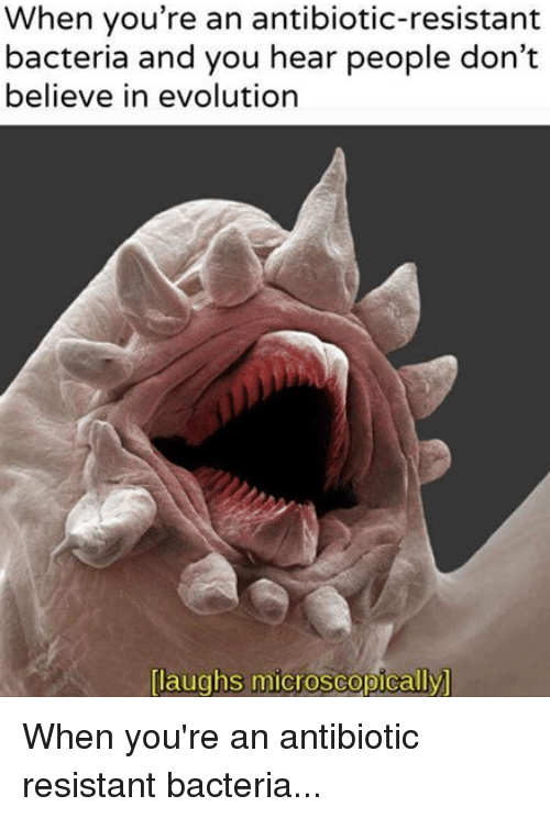 Laughs Microscopically: When you're an antibiotic-resistant  bacteria and you hear people don't  believe in evolution  laughs microscopically When you're an antibiotic resistant bacteria...