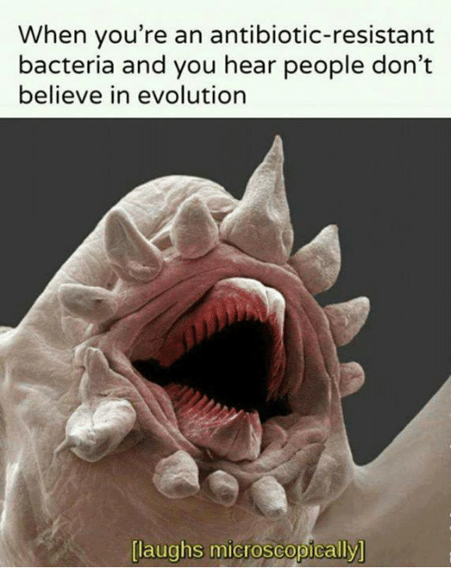 Laughs Microscopically: When you're an antibiotic-resistant  bacteria and you hear people don't  believe in evolution  laughs microscopically