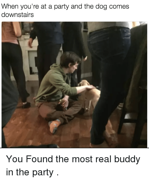When Youre At A Party: When you're at a party and the dog comes  downstairs You Found the most real buddy in the party .