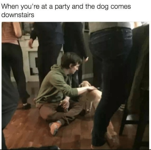 When Youre At A Party: When you're at a party and the dog comes  downstairs
