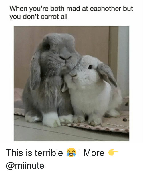 Terribler: When you're both mad at eachother but  you don't carrot all This is terrible 😂 | More 👉 @miinute