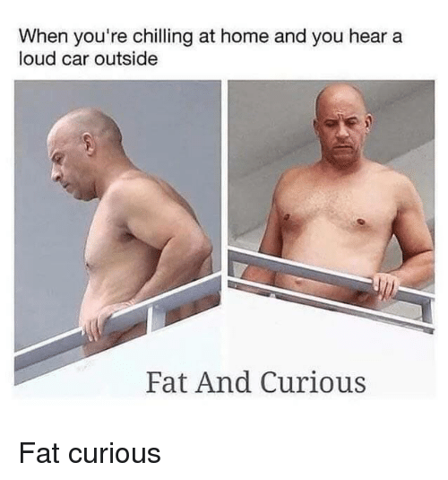 Home, Fat, and Car: When you're chilling at home and you hear a  loud car outside  Fat And Curious Fat  curious