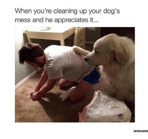 It Meme: When you're cleaning up your dog's  mess and he appreciates it..  memes com