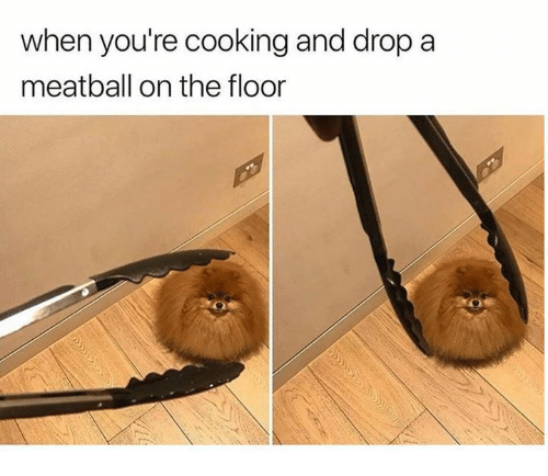 Cooking, Youre, and Meatball: when you're cooking and dropa  meatball on the floor