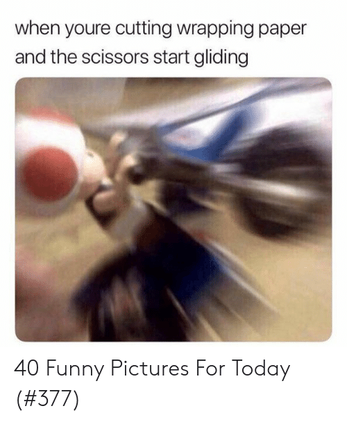 funny pictures: when youre cutting wrapping paper  and the scissors start gliding 40 Funny Pictures For Today (#377)