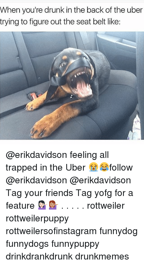 Drunk, Friends, and Memes: When you're drunk in the back of the uber  trying to figure out the seat belt like: @erikdavidson feeling all trapped in the Uber 😭😂follow @erikdavidson @erikdavidson Tag your friends Tag yofg for a feature 💁🏻💁🏽 . . . . . rottweiler rottweilerpuppy rottweilersofinstagram funnydog funnydogs funnypuppy drinkdrankdrunk drunkmemes