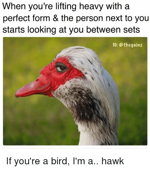 Memes, 🤖, and Personal: When you're lifting heavy with a  perfect form & the person next to you  starts looking at you between sets  IG: Othe gainz If you're a bird, I'm a.. hawk