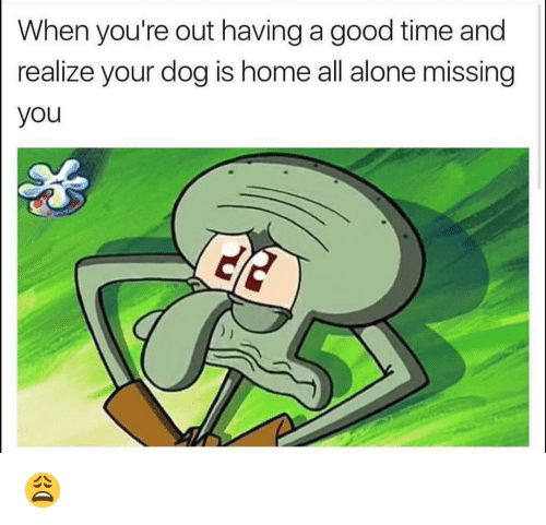 Youre Out: When you're out having a good time and  realize your dog is home all alone missing  you 😩