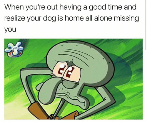Youre Out: When you're out having a good time and  realize your dog is home all alone missing  you