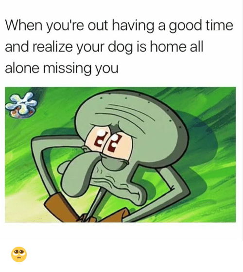Youre Out: When you're out having a good time  and realize your dog is home all  alone missing you 🥺