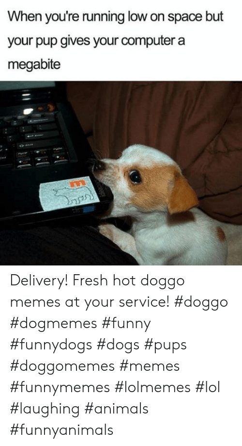 Animals, Dogs, and Fresh: When you're running low on space but  your pup gives your computer a  megabite  Cert Delivery! Fresh hot doggo memes at your service! #doggo #dogmemes #funny #funnydogs #dogs #pups #doggomemes #memes #funnymemes #lolmemes #lol #laughing #animals #funnyanimals