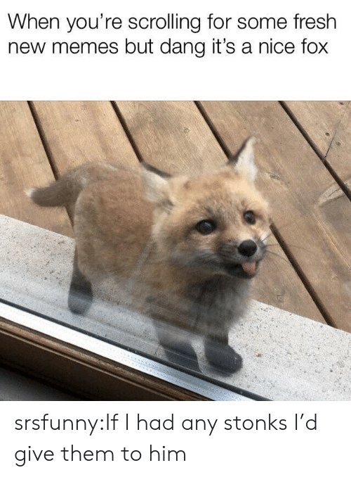 Fresh, Memes, and Tumblr: When you're scrolling for some fresh  new memes but dang it's a nice fox srsfunny:If I had any stonks I'd give them to him