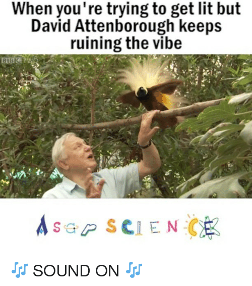 The Vibe: When you're trying to get lit but  David Attenborough keeps  ruining the vibe  A s a P SCIENCE 🎶 SOUND ON 🎶