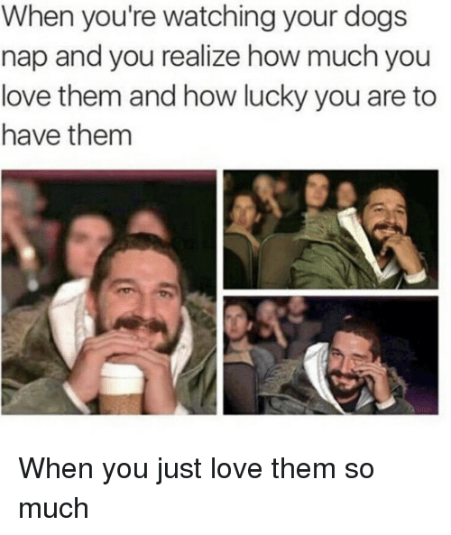 Dogs, Love, and How: When you're watching your dogs  nap and you realize how much you  love them and how lucky you are to  have them When you just love them so much