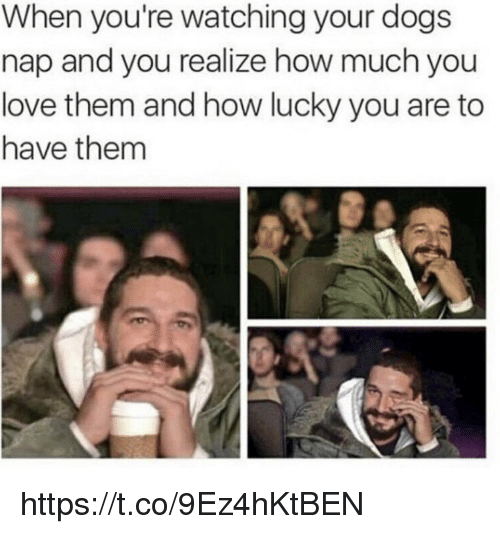 Dogs, Love, and Memes: When you're watching your dogs  nap and you realize how much you  love them and how lucky you are to  have them https://t.co/9Ez4hKtBEN