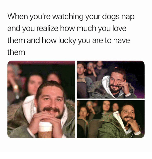Dogs, Love, and Girl Memes: When you're watching your dogs nap  and you realize how much you love  them and how lucky you are to have  them