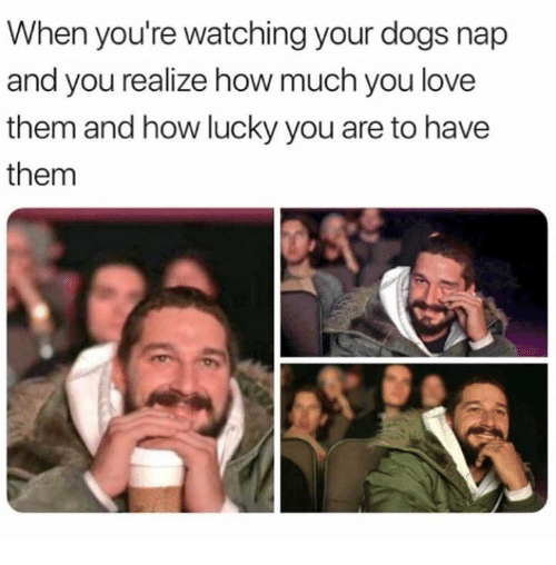 Dank, Dogs, and Love: When you're watching your dogs nap  and you realize how much you love  them and how lucky you are to have  them