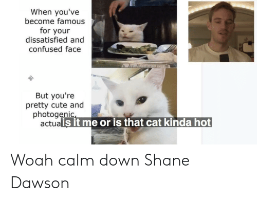 confused face: When you've  become famous  for your  dissatisfied and  confused face  But you're  pretty cute and  photogenic  actualis it me or is that cat kinda hot Woah calm down Shane Dawson