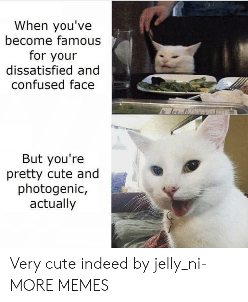 Confused, Cute, and Dank: When you've  become famous  for your  dissatisfied and  confused face  But you're  pretty cute and  photogenic,  actually Very cute indeed by jelly_ni- MORE MEMES