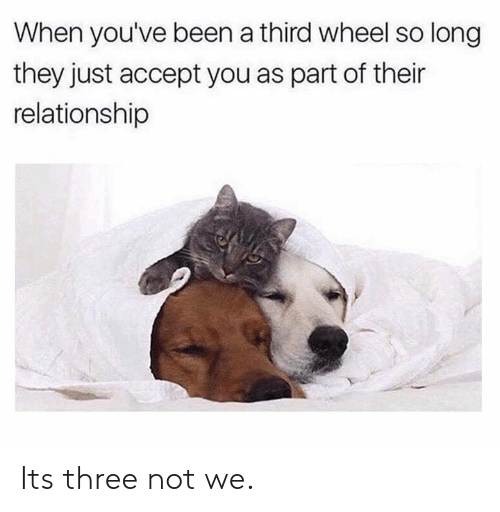 Dank, Been, and 🤖: When you've been a third wheel so long  they just accept you as part of their  relationship Its three not we.
